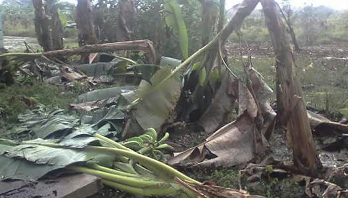 Lluvias y fuertes vientos provocan daños en cultivos