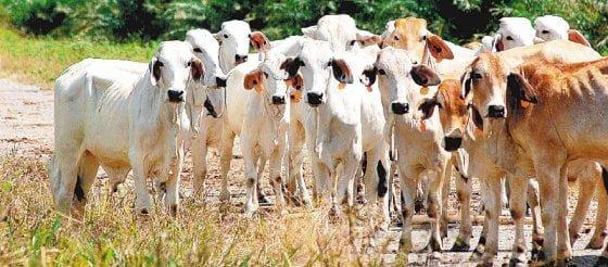 Sigue la polémica entre ganaderos y Gobierno por acuerdo con acreedores de Friogan