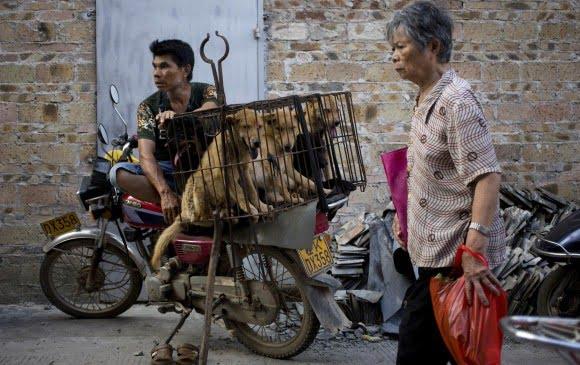 Festival de la carne de perro en China se realiza en medio de protestas