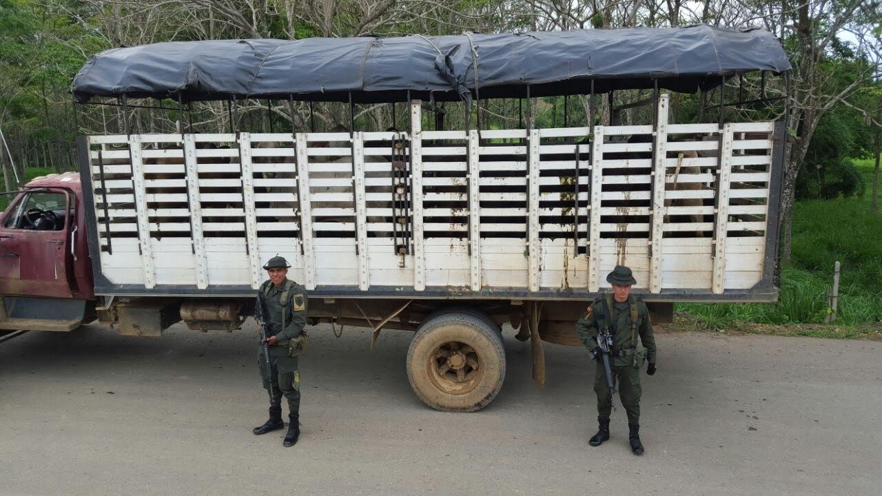 Policía decomisó 14 vacas
