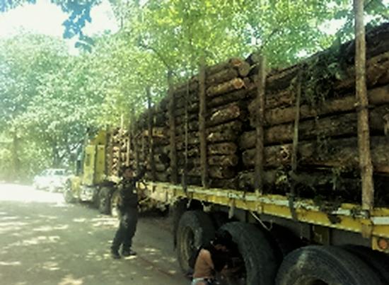 Incautan teca en Puerto Libertador