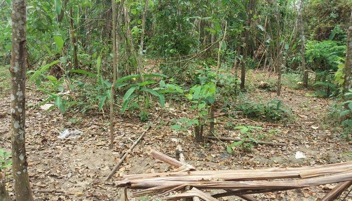 En Tierralta neutralizan un campamento ilegal del Clan del Golfo para 15 integrantes