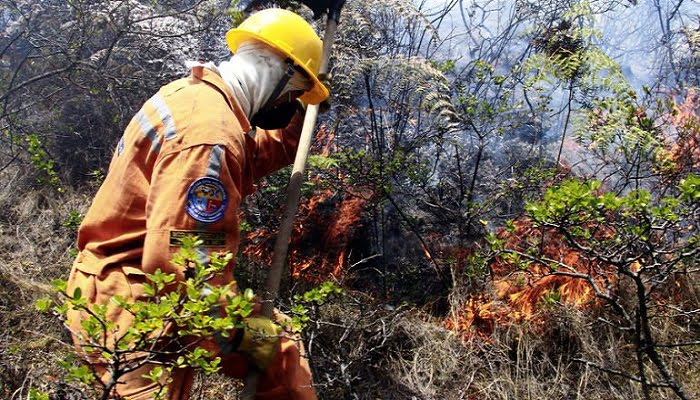 Incendio en Las Colinas se llevó 20 hectáreas de vegetación