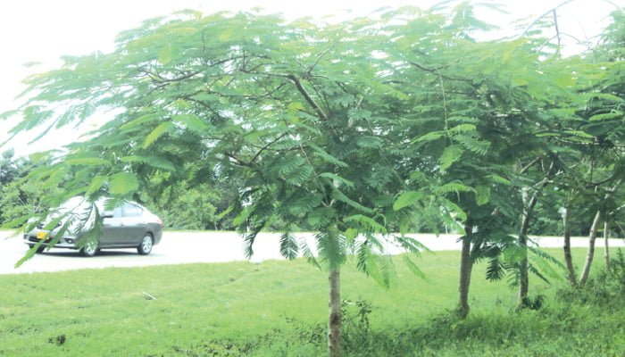Ramas de árboles obstruyen la visión de señales viales - Diario La ...