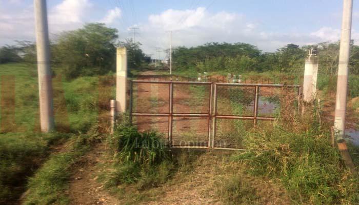 Peligroso tráfico de ganado en vías de acceso a la ciudad