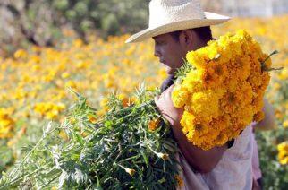 Colombia celebra hoy el Día del Florista