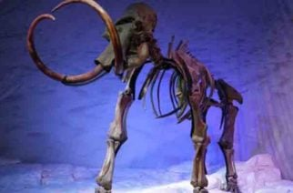 Hallan restos de un elefante prehistórico anterior al mamut