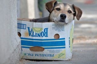 ¡El amor no se compra, se adopta! 27 de julio, Día Mundial del Perro Callejero