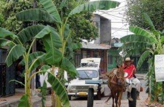 Habitantes del municipio de Momil sembraron matas de plátano para que les mejoren las calles