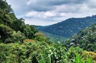 Reservas Forestales estarían en peligro: Contraloría