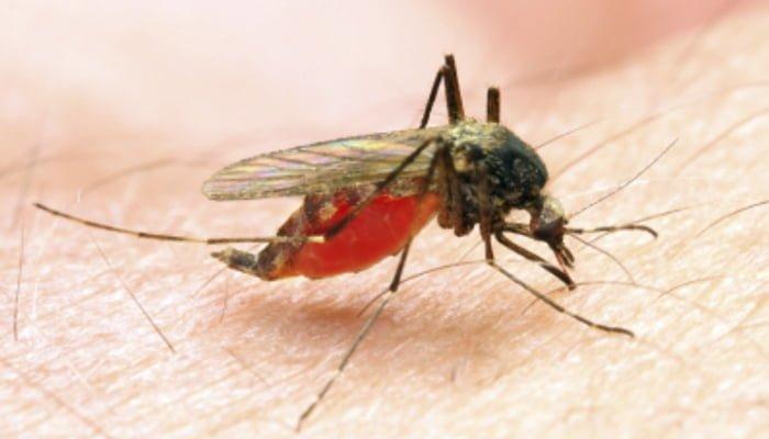 ¡Preocupante!: En lo que va corrido del 2019 han sido reportado 12.828 casos de malaria en Colombia