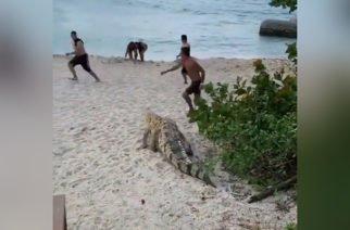 ¡Qué Susto! Caimán apareció entre visitantes del Parque Nacional Tayrona