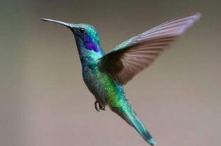 10 de enero, Día Mundial de las Aves