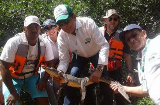 Venta de piel de caimán aguja sólo procederá tras un estudio poblacional de la CVS