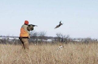 Corte Constitucional prohíbe caza deportiva