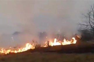 Vídeo: Incendio en Ayapel acabó con más de 20 hectáreas de mangle