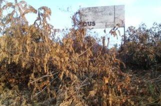 Personas inescrupulosas acabaron con reserva forestal en Pueblo Nuevo