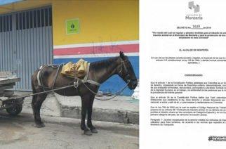 Se expide decreto que busca sustituir los vehículos de tracción animal en Montería