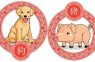 Según el #HoróscopoChino así le irá a los signos Perro y Cerdo en el 2019