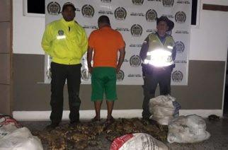 ¿Temporada de capturados por hicoteas?: Un detenido en Momil con 162 especímenes