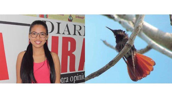 Avistamiento del colibrí Cola de Abanico