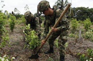 Colombia sigue siendo el primero en producción de coca según la ONU