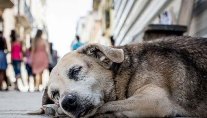 En Planeta Rica ONG realiza campaña en pro de animales abandonados o perdidos