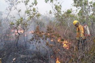 Incendio forestal en Chinú consumió más de 450 hectáreas de vegetación