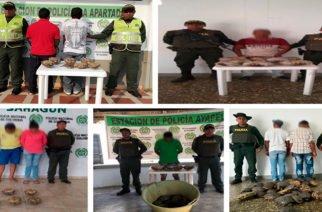 En Ayapel y Sahagún fueron capturadas ochos personas e incautadas 117 hicoteas