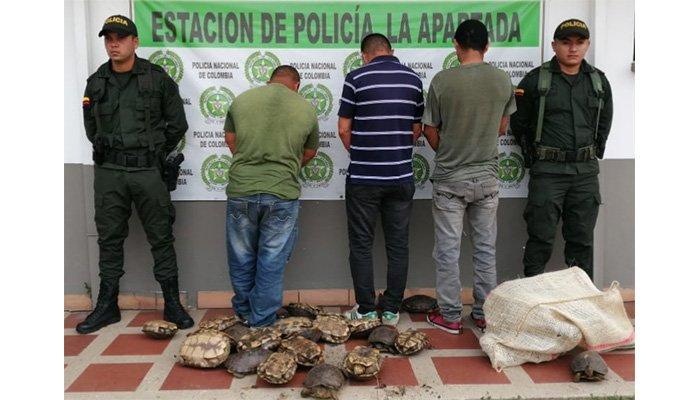 Continúa la ofensiva contra el comercio ilegal de hicoteas: Policía capturó a tres sujetos por ello