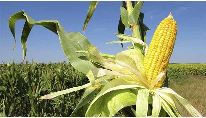 Coopiagros organizó encuentro con sector agro para impulsar temporada de cultivo de maíz 2019