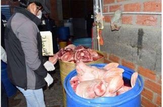 De mataderos ilegales proviene el 80% del cerdo que consumen los monterianos