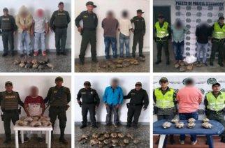 Nueve hombres capturados por tenencia irregular de 100 hicoteas