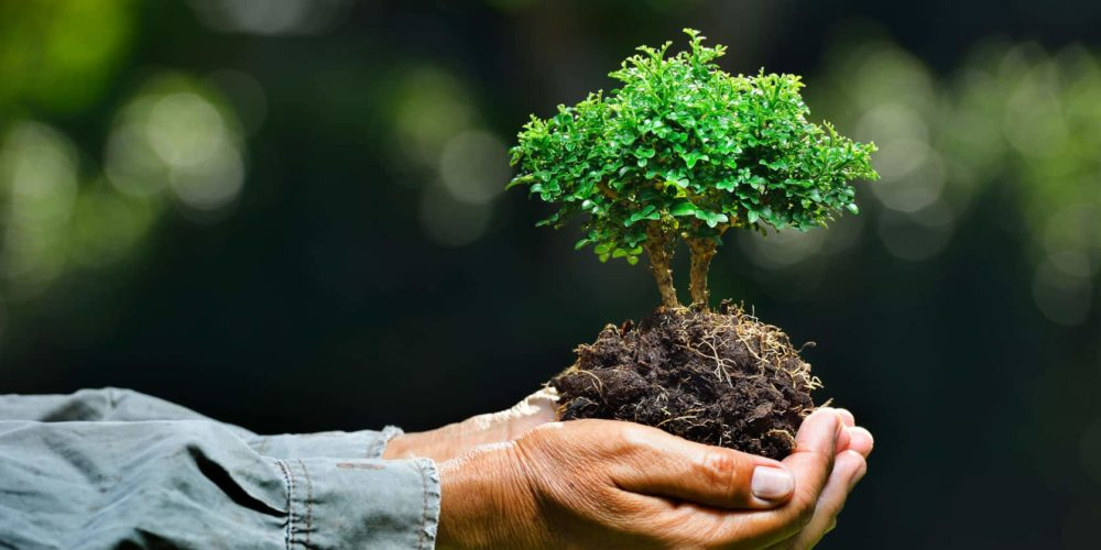¡Todos a plantar! Hoy es Día Nacional del Árbol