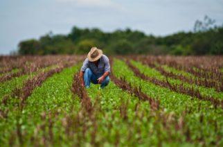 Crédito agropecuario creció 21,6% en el primer bimestre de 2019