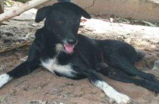 'Ping Pong', el perro héroe que salvó a un bebé que fue enterrado vivo