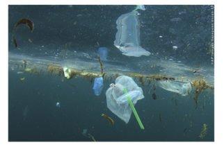 A partir del 2021 Europa prohibirá la utilización de plásticos de un solo uso