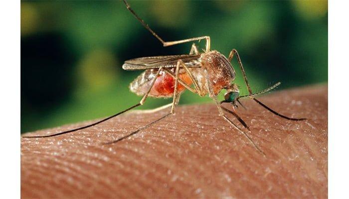 Mayaro: El exótico virus familia del Zika y Chikungunya que amenaza a Latinoamérica