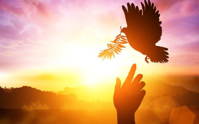 16 de mayo, Día Internacional de la Convivencia en Paz