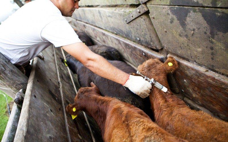 Atención ganaderos: A partir del lunes 13 inicia ciclo de vacunación contra la aftosa y brucelosis
