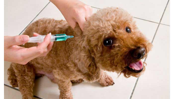 Este viernes jornada de vacunación antirrábica gratuita en la Av Primera