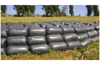 MinAgricultura beneficiará a 9 mil ganaderos con 200 toneladas de silo