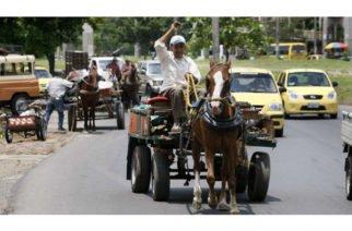 Quedó prohibida la tracción animal en Montería tras entrada en vigencia de nuevo decreto