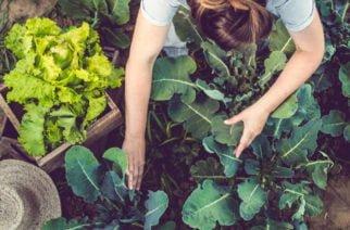 Hoy se celebra el Día de la Gastronomía sostenible