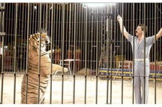 Domador de circo italiano fue asesinado por sus cuatro tigres ante el horror de sus compañeros