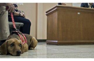 Por primera vez en América Latina un perro asiste a un juicio como testigo por maltrato en su contra