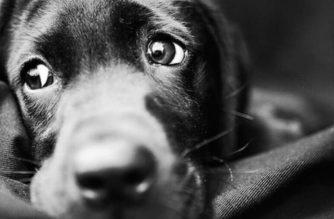 En Quito donan alimento envenenado a refugio animal y se produjo una mortandad canina