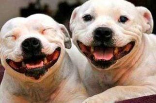 ¡El amor camina en cuatro patas! Hoy se celebra el Día Mundial del Perro