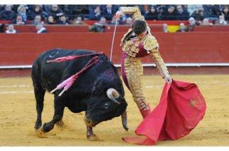 Aprueban en tercer debate prohibición de uso de recursos públicos para corridas de Toros