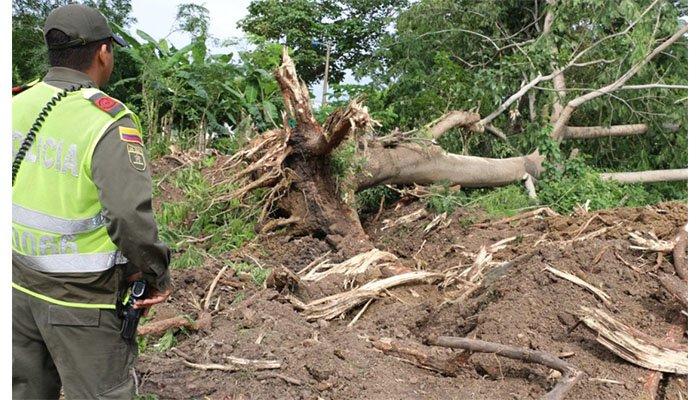 Investigan a constructora y suspenden obra de urbanización por tala masiva de árboles en Montería